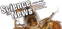 Lobster Rings, Poisonous Primates, Water on Mercury, Peel-and-Stick Solar Panels