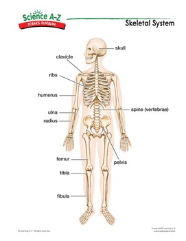 Science a z human body grades 3 4 life science unit ccuart Images