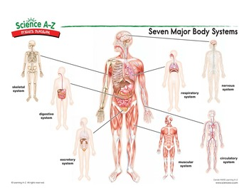 Science a z seven major body systems science diagram ccuart Images