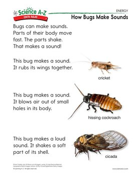 How Bugs Make Sounds - Quick Read