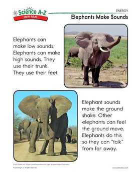 Elephants Make Sounds - Quick Read