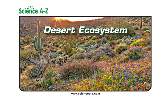 Desert Ecosystem Picture Book
