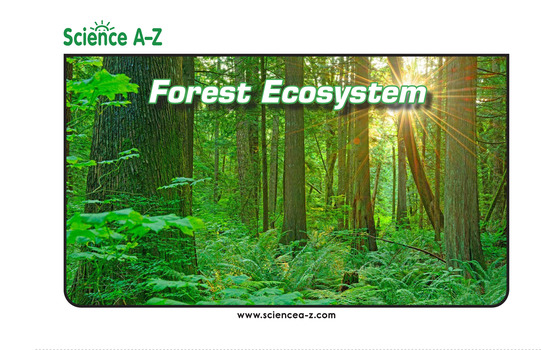 Forest Ecosystem Picture Book