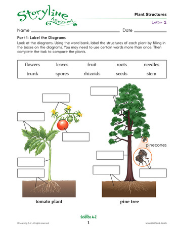 Plant Structures Assessment